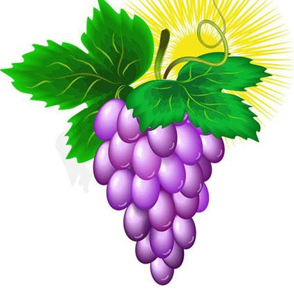 Виноград рисование в coreldraw